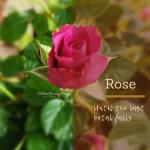 WW#30 Rose