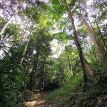 Hutan Lipur Lentang